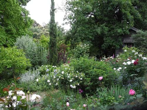 Landscape Design Melbourne | Sandra McMahon Gardenscape design | A rose garden full of expertly selected varieties and perennials, all suited to local conditions.
