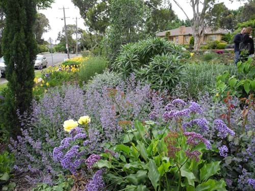 Landscape designers Melbourne |  Sandra McMahon Gardenscape Design | Plants of the Mediterranean flourish on this site.