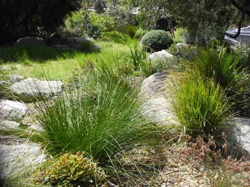 Native garden design | Sandra McMahon Gardenscape Design|