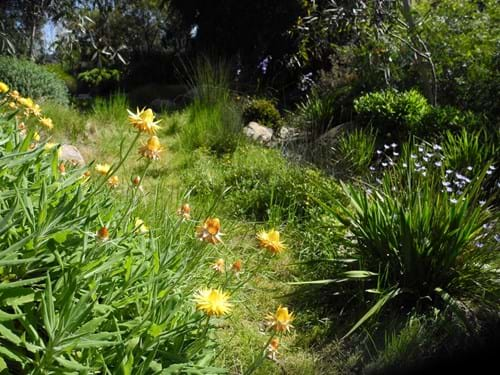 Native Landscape design Melbourne | Sandra McMahon Gardenscape Design